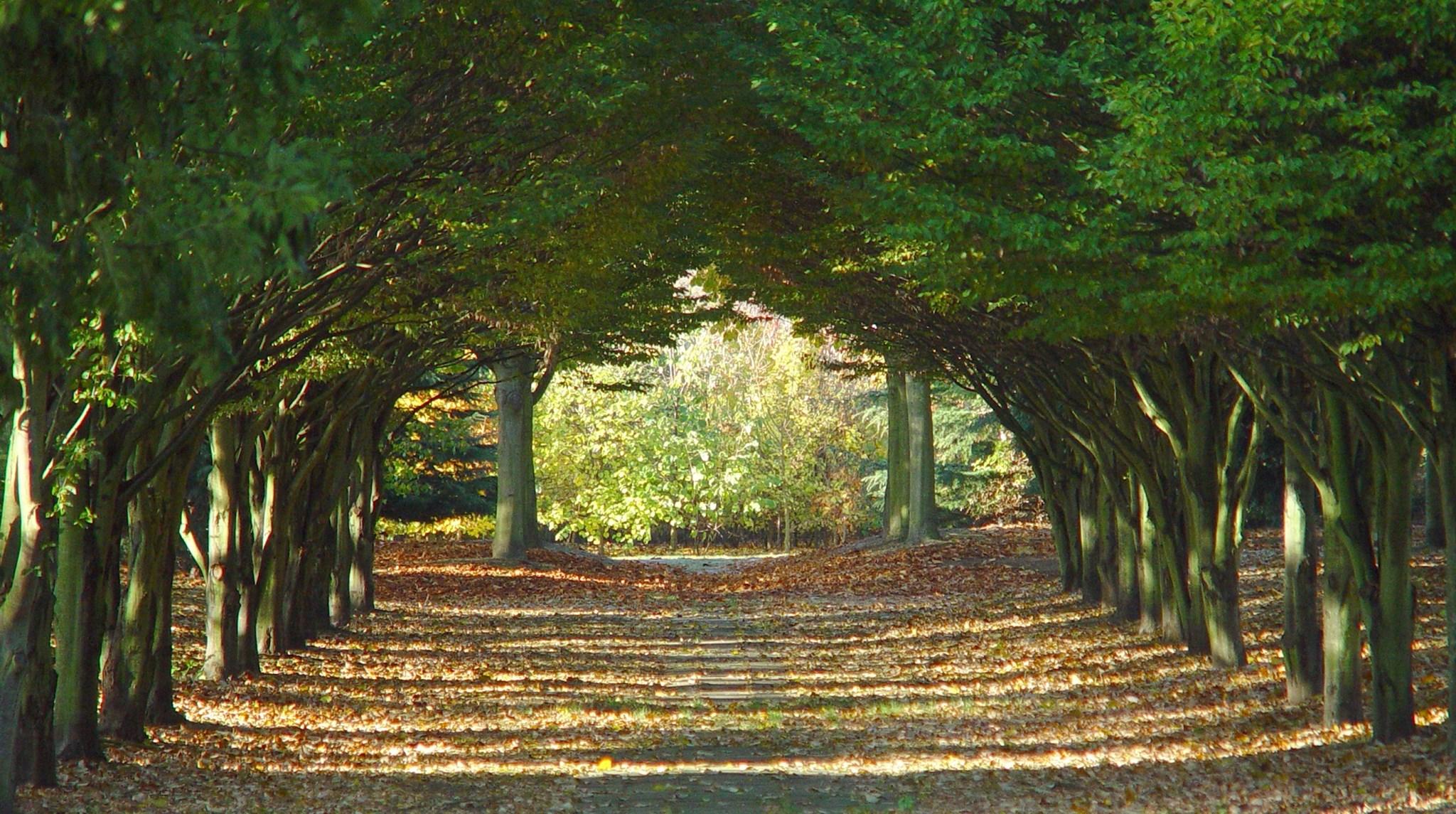 Tree Cathedral Milton Keynes